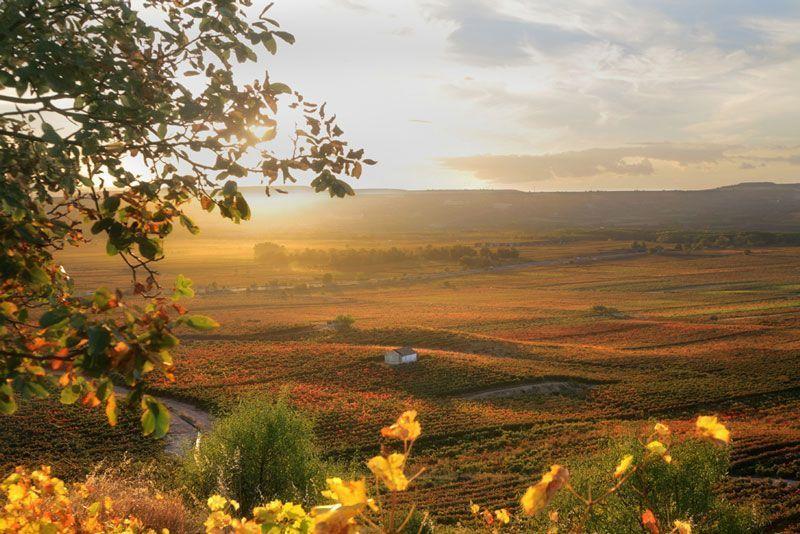 Campos de viñas entre las localidades de Urueñas y Cenicero en La Rioja | Foto: La Rioja Turismo