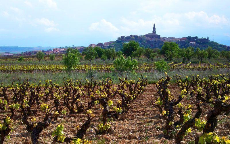 Briones desde las viñas que circundan el río Ebro | Foto: David Fernández
