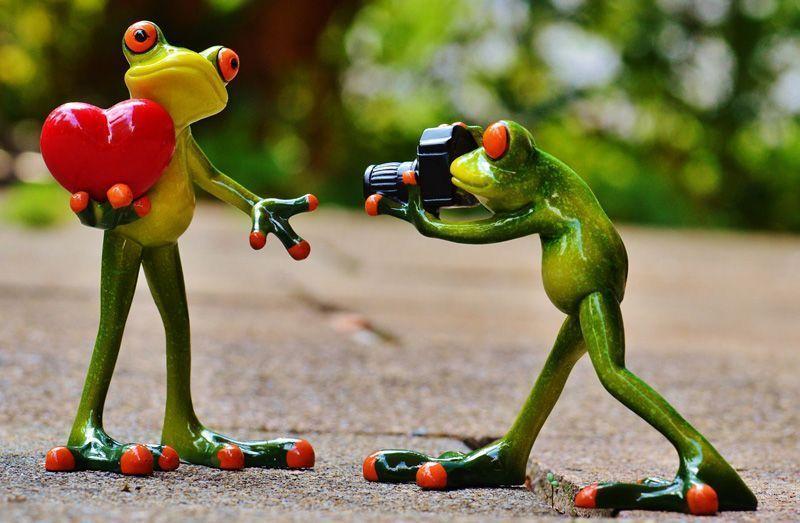 Dos ranas demostrándose su amor | Foto: Alexas_Fotos para Pixabay