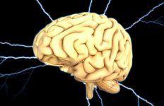 El cerebro, de Rob DeSalle e Ian Tattersall