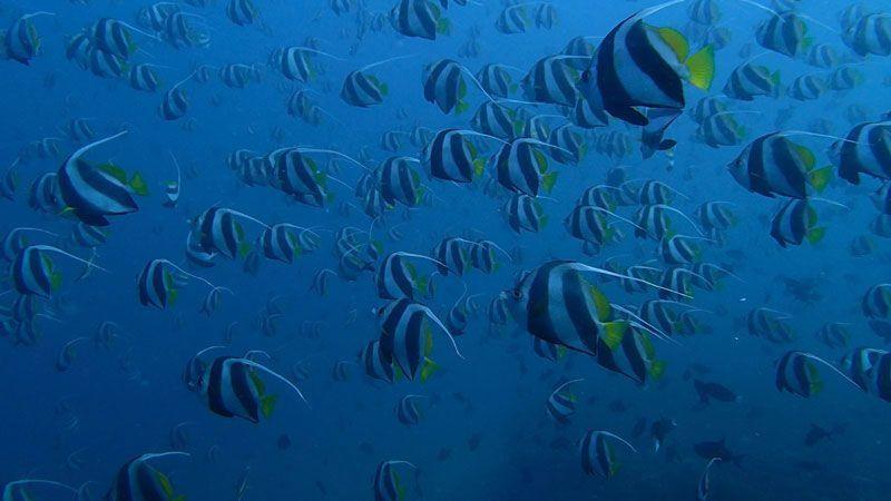 Fauna marina en Maldivas | Foto: Club Buceo Narval