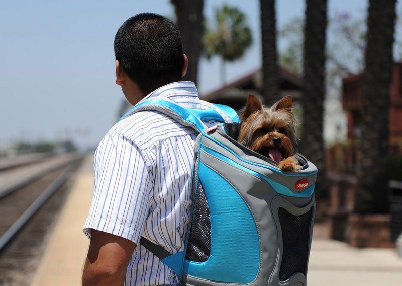 Una perrita satisfecha y cómoda en esta bolsa de viaje