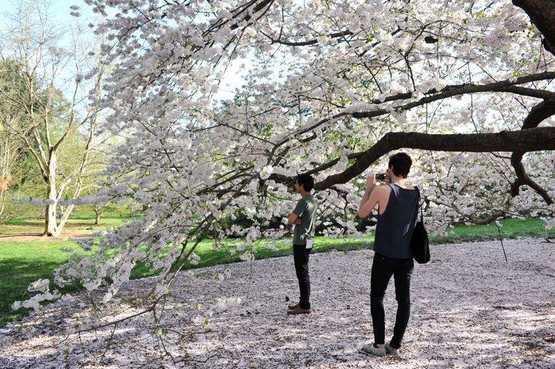 Jardín Botánico de Nueva York   Foto: Julienn Schaer para Turismo de Nueva York