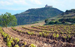 Qué hacer en La Rioja en verano