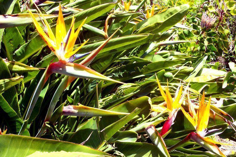 Flores del Paraíso, en el Parque Nacional de Garajonay | Foto: David Fernández