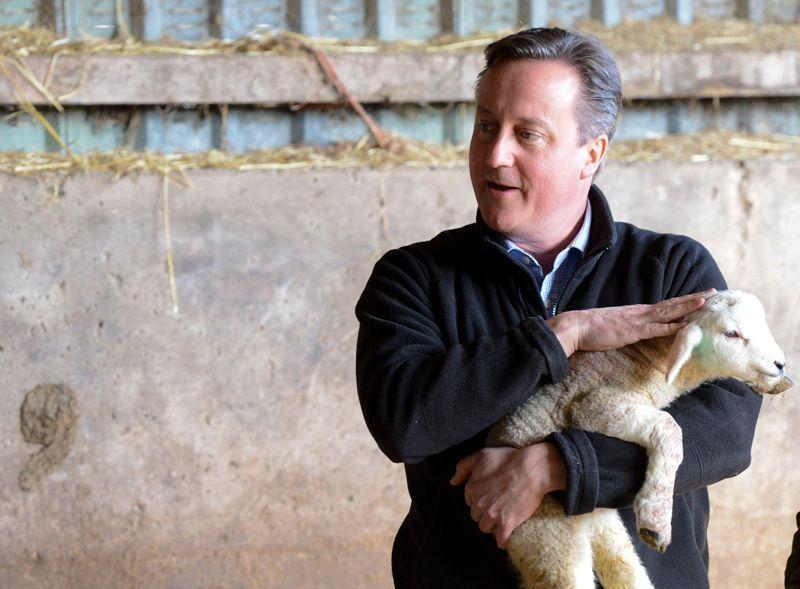 Dirigiendo a los corderos en la Unión Europea | Foto: Georgina Coupe para Crown Copyright