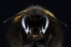 ¿Qué pasaría si no hubiera abejas?