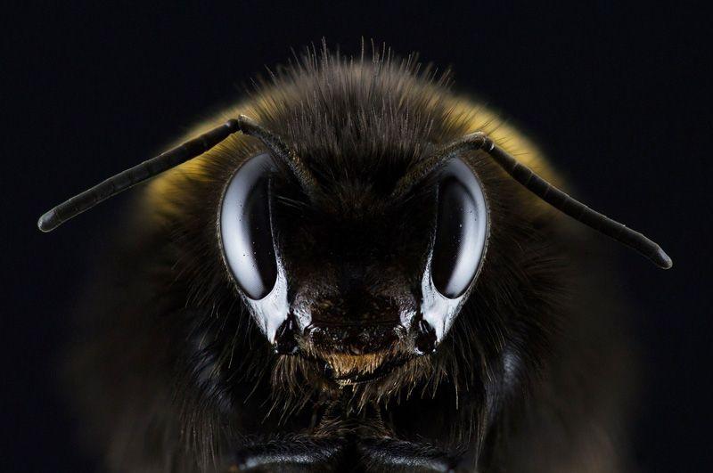 Una abeja en primer plano | Foto: Image4you para Pixabay