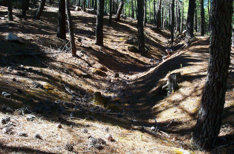 Las trincheras se pueden observar y recorrer durante toda la ruta | Foto: David Fernández