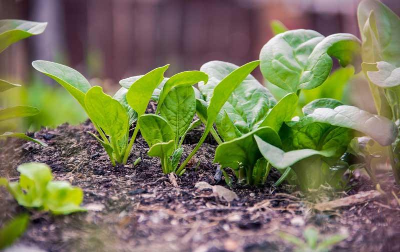 Alimentación ecológica | Foto: Pixabay