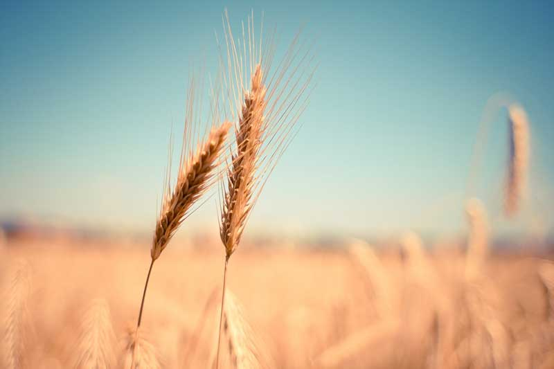 Cuál es la historia y origen de la agricultura